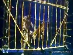 kitty katzu (bamboo) caged underwater
