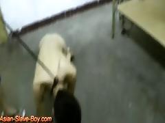 slim oriental boy serf doggy trainning